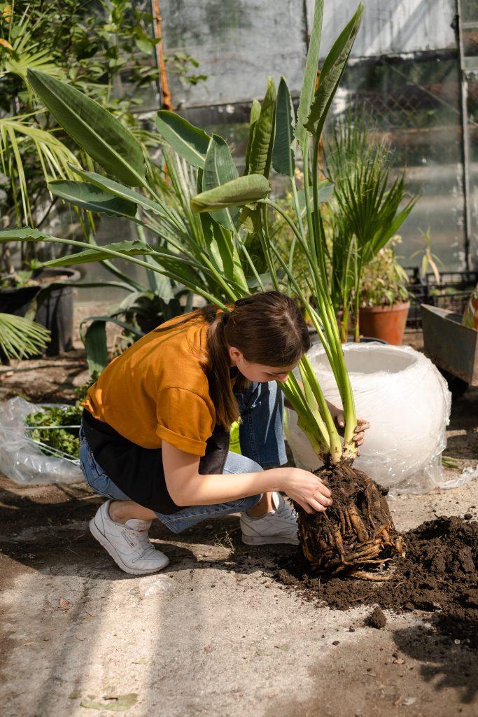 Anastasia Haraz sădește plante/FOTO: Ecaterina Șalaru