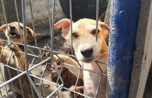 """Imagine de la Azilul AOVA. Sursa: Pagina de Facebook """"SCPA – Secția de Control și Protecția Animalelor, mun. Chișinău"""""""