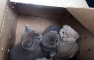 Trafic ilegal cu pisici de rasă la vama TudoraTrafic ilegal cu pisici de rasă la vama Tudora